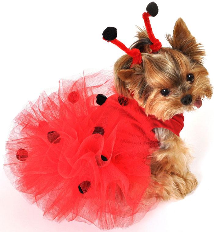 Купить Платья Для Собачки